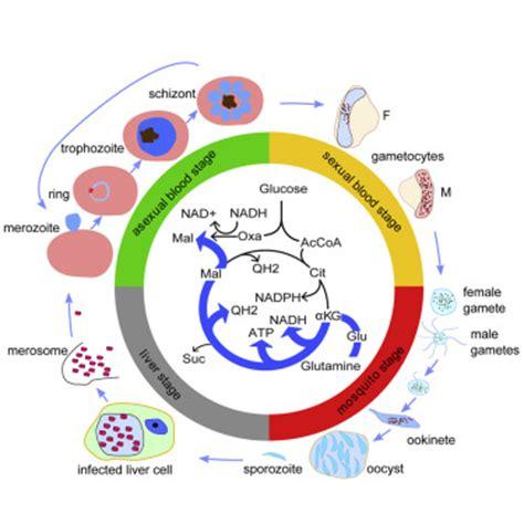 Research paper of malaria - Security Burglar Alarm System