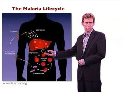 Research report on malaria